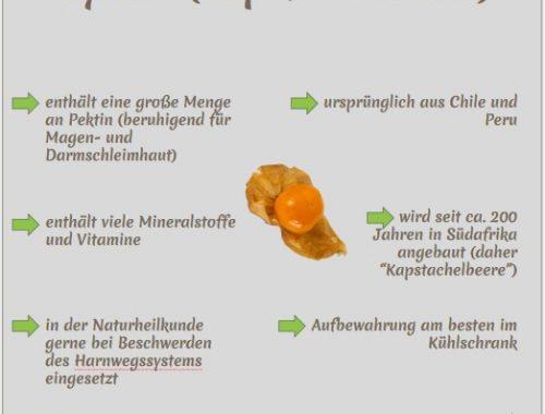 Physalis Wissens-Snack